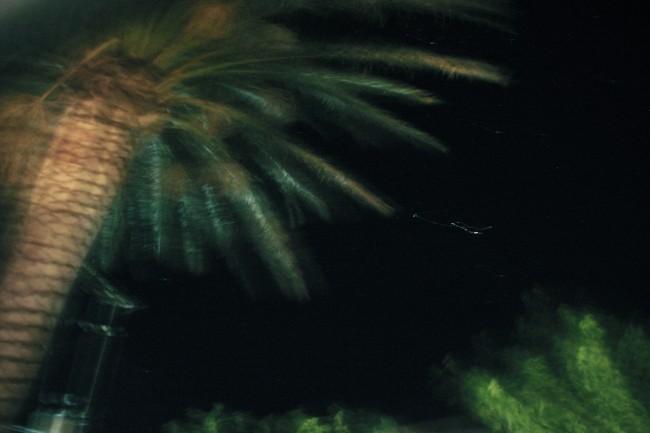 palmtree#1-