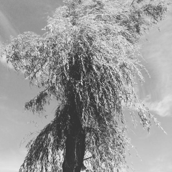 vent d'est
